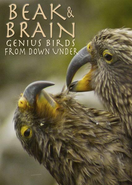 Ptačí inteligence bez hranic online cz